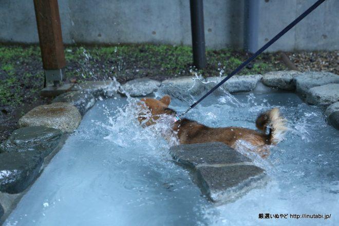 ホテル凛香 富士山中湖リゾート DOG SPA