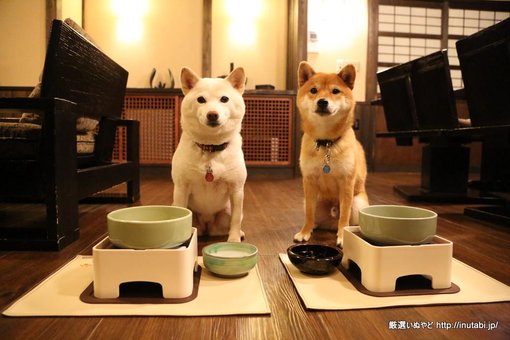 はんなり伊豆高原 犬たちお食事